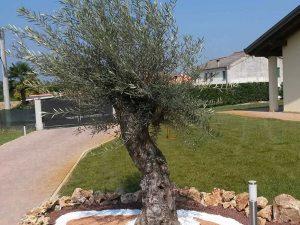 realizzazione-prati-giardini-imola-faenza